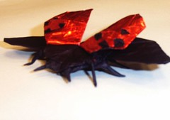 Flying Ladybird beetle (PhillipWest) Tags: origami paperfolding papiroflexia