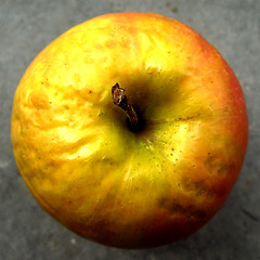 Pomme 01 (theredshoot) Tags: eve orange adam apple nature fruit jaune rouge gris soleil ride morte nourriture olivier trou pomme queu pourri rond aliment vieu theredman lerouge