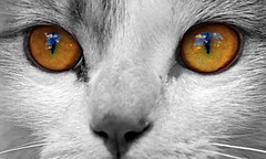 Sky in your eyes (ecatoncheires) Tags: sky eye look clouds cat interestingness nuvole explore sguardo cielo gatto occhio explored ecatoncheires
