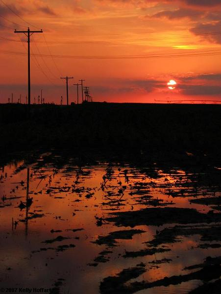 Sunset over Irrigated Field