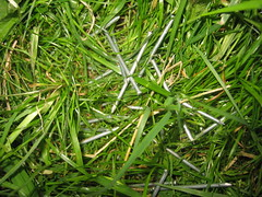 Nails in a grass