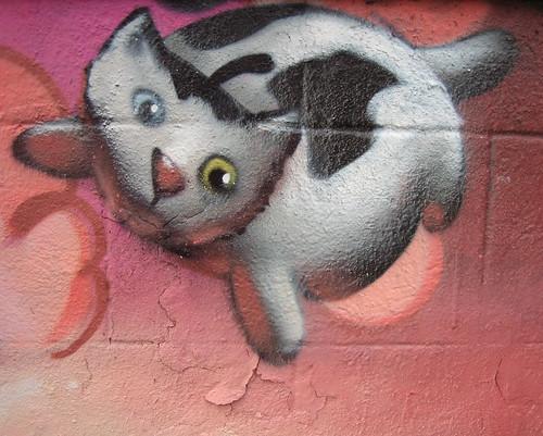 cern kitty