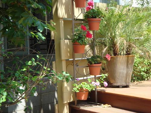 Walk street potted plants