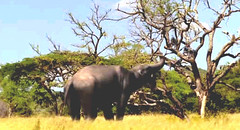 15 Deinotherium wants that family in the tree
