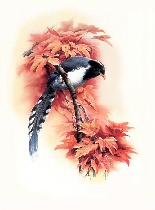 1475190968 482e003cc4 o - cute bird paintings