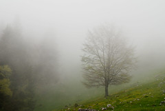 (thecodemaker) Tags: morning mountains tree fog 50mm piatra copac craiului zanoaga ceata muntii nikond80