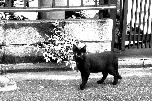 Today's Cat@2010-10-25