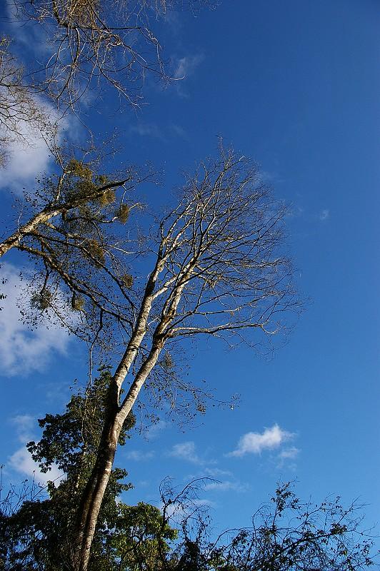 IMGP7773_藍天與枯樹