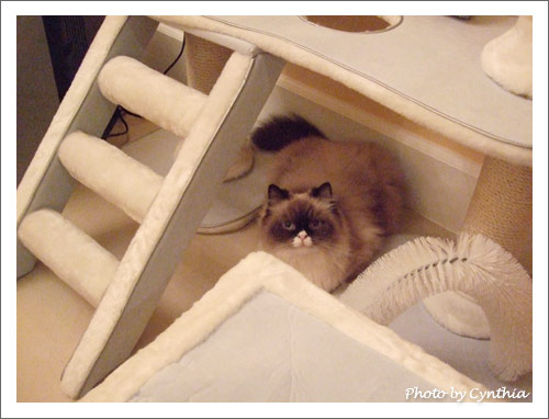 Mori假裝會用貓跳台