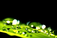 Spheres (cord1964) Tags: macro green nature water drops raw dof spheres worldbest isawyoufirst brillianteyejewel