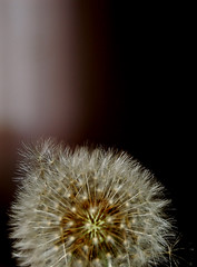 The flower of  desire (Angelo Nairod) Tags: flower lesamisdupetitprince angelonairod