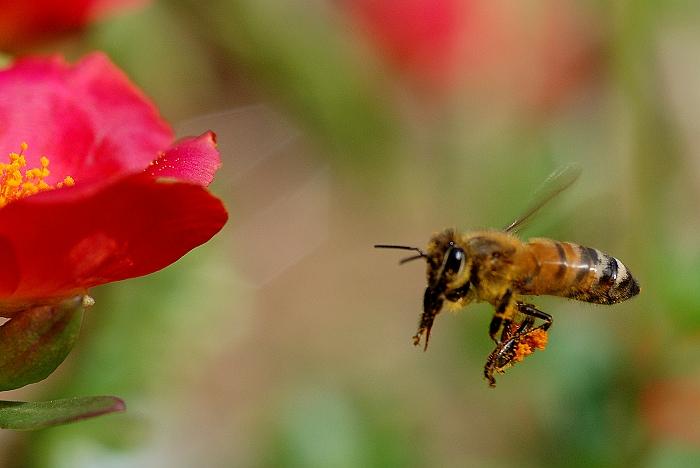 蜜蜂0020