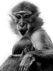 Mother & Child (Jrg Dickmann Photography) Tags: portrait bw animal zoo mother ape sw wuppertal primate affe canon70200f4l primat canon400d