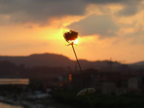 Burning Flower 1