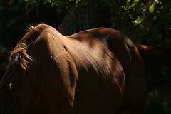 Spirit Horse (Hotash) Tags: ranch light red horses horse dark photography book friend bev spirit tony september gift 2007 stromberg