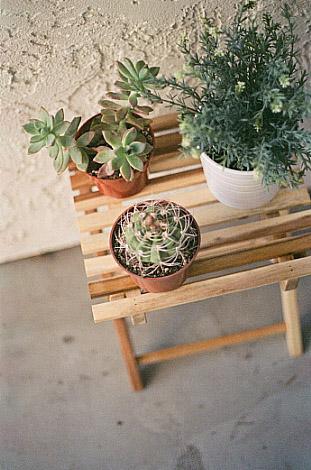 cactuses-film