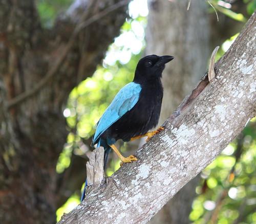 Red Head Bird Identification   Sciencing