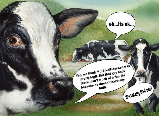 cows love mtn