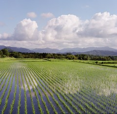 the art in the rice field (ensemble_atk) Tags: sky cloud mountain reflection green 6x6 mamiya tlr film nature topf25 water sunshine japan mediumformat landscape spring bravo fuji 500v20f bluesky 400 atk reflexions  soe aesthetic mamiyac220 500x500  supershot mtdaisen beautifulphoto pro400 twinlensreflexcamera golddragon 250v10f abigfave autaut anawesomeshot impressedbeauty superaplus aplusphoto japaneselandscape diamondclassphotographer excellentphotographerawards theunforgettablepictures colourartaward atkfavo tup2 flickrestrellas quarzoespecial goldenart thebestofcengizsqueezeme2groups