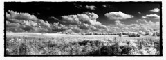 infrared field (Adam FLiK) Tags: sky white black field grass clouds landscape nikon infrared d1x flikproductionscom flikproductions adamflikkema