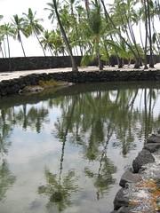 Day13_Hawaii (8) (Amudha Irudayam) Tags: beach hawaii bigisland amu amudha