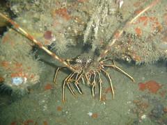 dsc00032dy4 (coismarbella) Tags: crustaceos