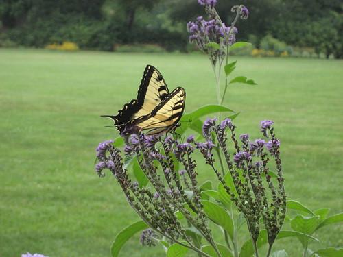 Visitor in Jefferson's Garden