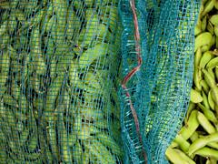 groen blauw geel groen (M00k) Tags: china blue food green yellow beans market greens xizhou reticula