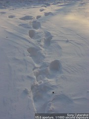 footsteps on snow (pchowhan) Tags: sony digi