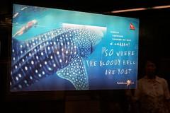 Aussie Advertising (Drew Graham) Tags: hongkong mtr jordanstation australiaadvertising