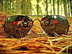 Into The Pine Forest (Jess Gutirrez Gmez) Tags: camera trees tree hoja glass pine forest hojas arbol glasses leaf rojo colombia arboles jesus pines bosque gutierrez gafas pinos leafs lente pino medellin lentes camara gomez colorido citrit sonydscw90 colourartaward