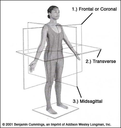 Picture Anatomical Position Human Body http://howztraining.blogspot.com/