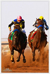 Horse racing5 (njjm) Tags: camera canon lens eos aperture exposure time iso 200 7d mm f56 sec length 100400mm 160 focal 1640