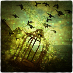 Free (~Alia~) Tags: flowers light sky bird texture birds clouds lights cage sl textures ciel secondlife textured oiseaux alia theblackbirds slwindlight qunhua sharingart aniatatarynowicz stonedigitalexperienceagency