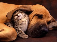 Dog and Cat Sleeping (kc_6201) Tags: dog cat sleep