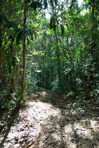Jungle Contrast