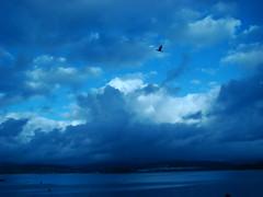 Galicia es azul (-Merce-) Tags: blue sea sky españa bird azul clouds catchycolors geotagged mar spain paisaje galicia cielo nubes lanscape pájaro sada catchycolorsblue eligetucolor mmbmrs geo:lat=4335417241474302 geo:lon=8254472960091533 ríadebetanzos