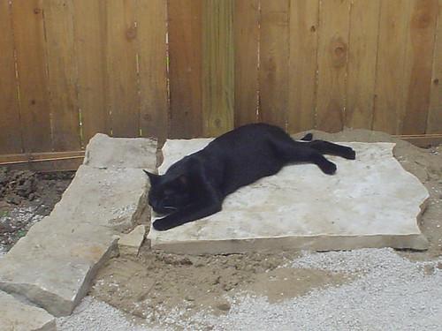 Bubba naps on flagstone