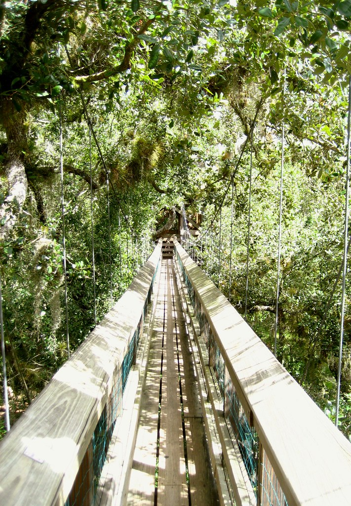 Myakka Forest Canopy Observation Tower