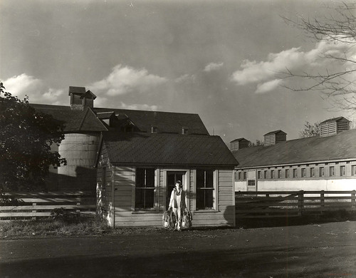 Barns and model dairy, ca. 1930