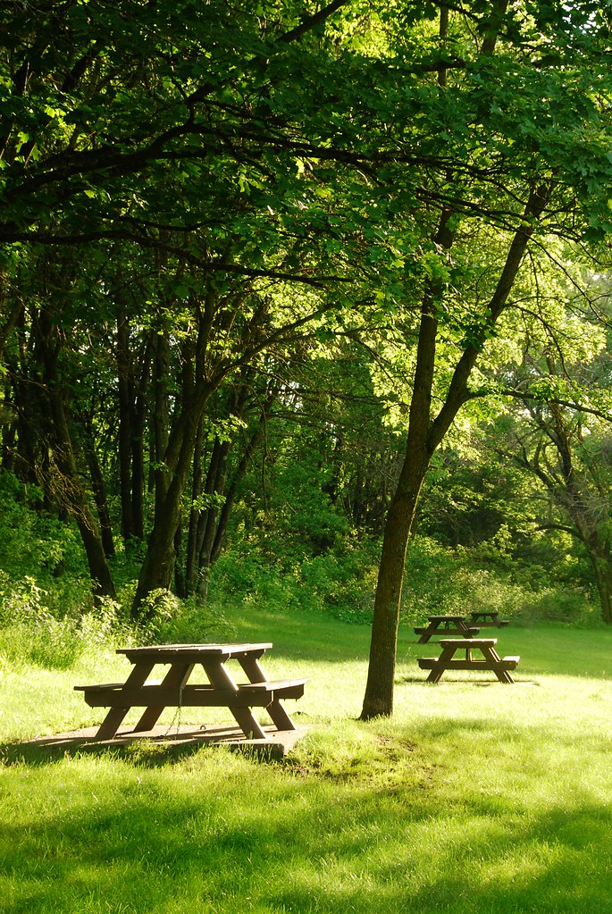 Picnic tables in a light grassy patch.