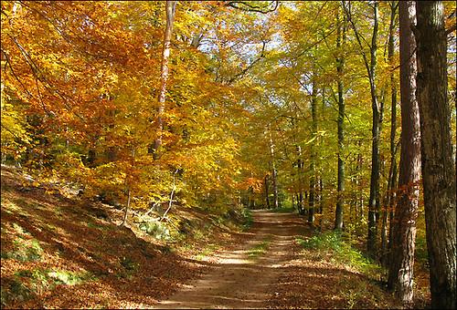 l'automne express - Page 3 5127408053_e0b9c5342b