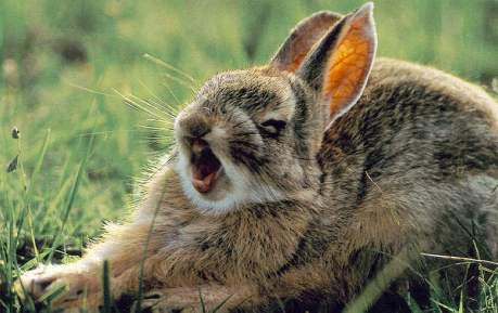 bunny attack