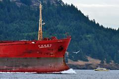 OM_freighter.jpg