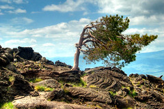 """Lonely pine"" on Etna (Thomas Reichart ) Tags: italien italy mountain 3 tree pine wow volcano lava europe italia great sicily lonely etna dri hdr sicilia mediterraneansea mtetna pahoehoe sizilien tna 3exp mongibello treesubject picturepages"