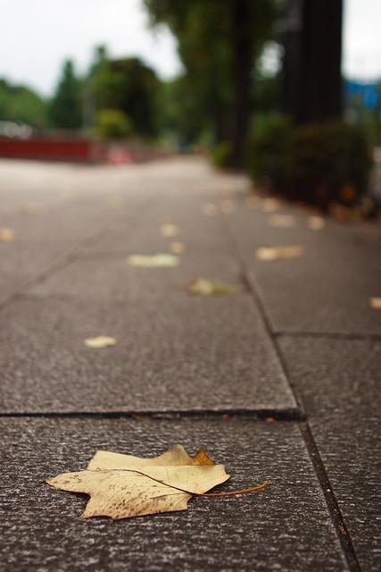 初夏の落葉