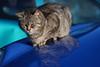 Micio in relax (joeanty) Tags: cat nikon gatto joeanty mcb1419 gianlucaantonelli