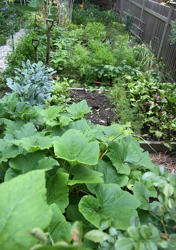 squash garden