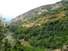 Bergeries de Focolara depuis le versant en face