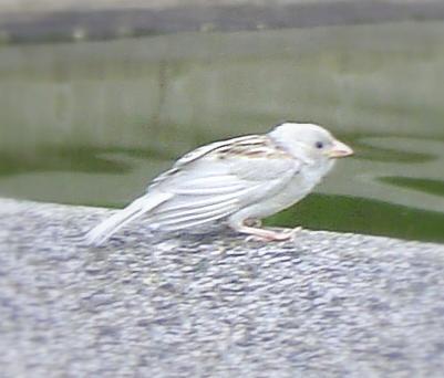 無限台南-白子麻雀-2